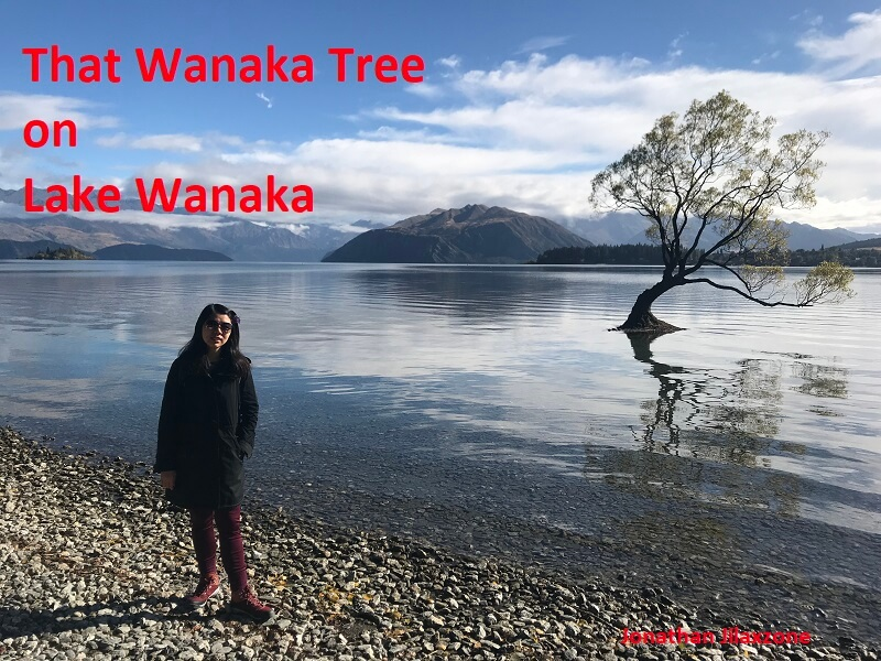 Road Trip to New Zealand that wanaka tree on lake wanaka