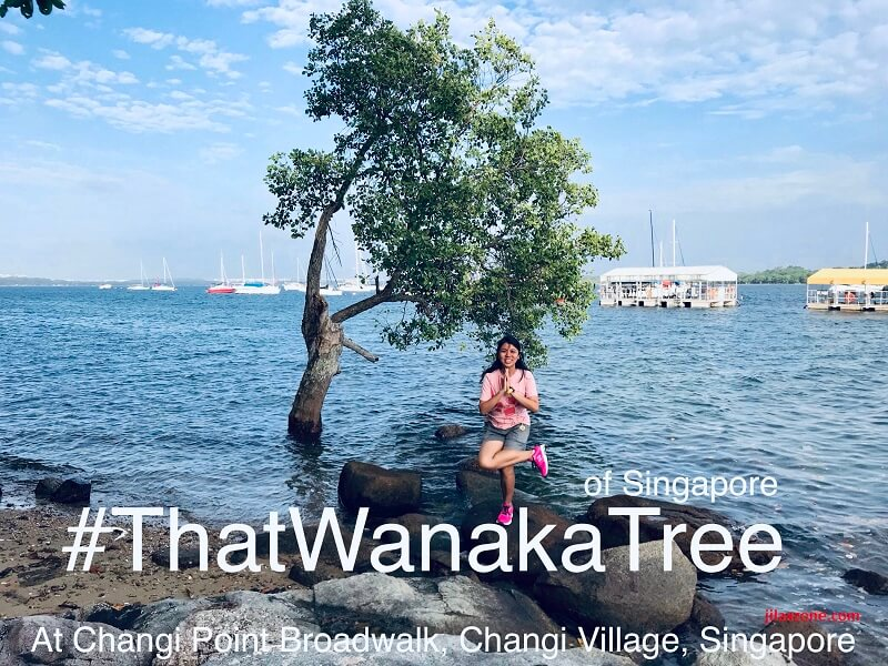 #thatwanakatree changi boardwalk changi village singapore jilaxzone.com