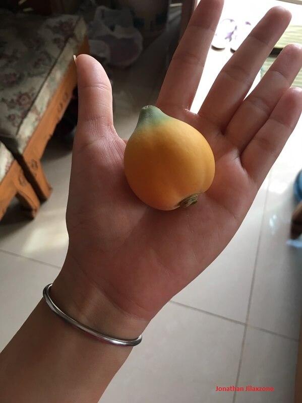 a young papaya jilaxzone.com